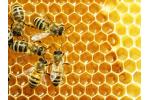 Honey tasting pic