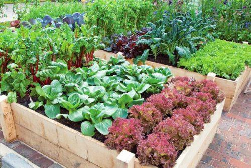 vegetable-gardening-tips_mini-e1446569646343