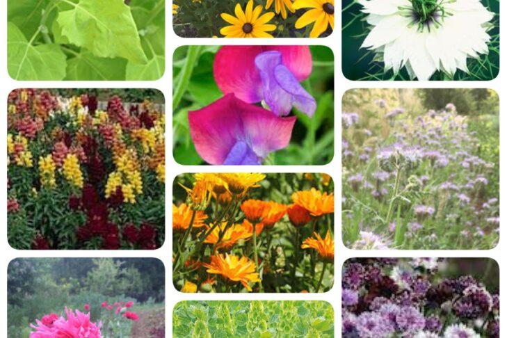 cool season flowers