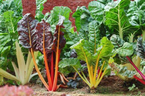 winter vegetables demo